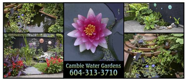 Cambie water Gardens logo